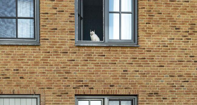 Deel van een gevel van een huis. Er zit een witte kat achter het raam.
